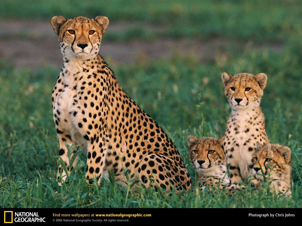 http://1.bp.blogspot.com/-X3mGwXK9E4c/T_rZhTiMBcI/AAAAAAAAASw/RYGoLodDQxY/s1600/tiger+big+cat+(2).jpg