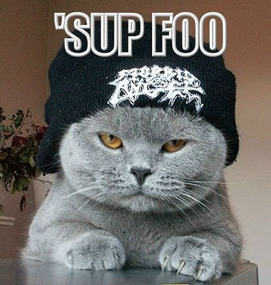Gangster Cat