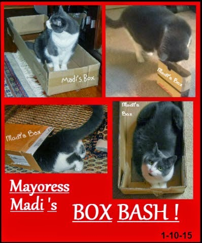 MY BOX BASH