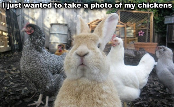 Funny animals of the week - 20 June 2014 (40 pics), funny animal pictures, animal photos