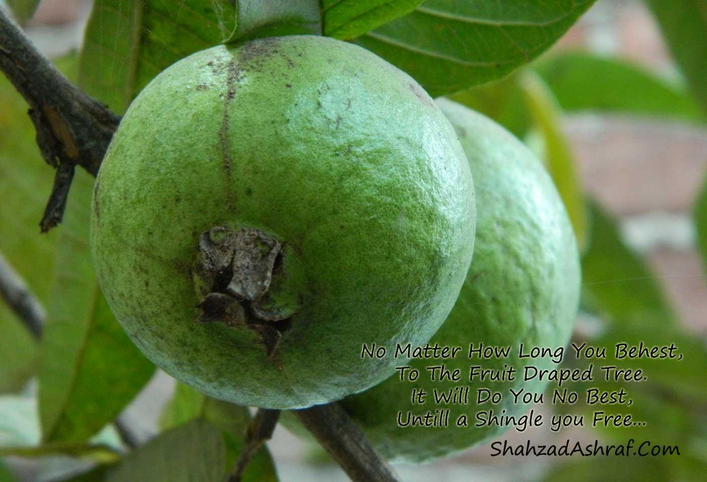 best fruit tree quotes pebble