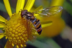 wholefoodsdiet bees and wasps