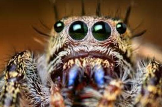 Makdi ya Spider kaat le to Kya Upchar Karen