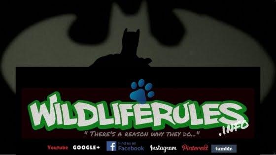 WildLifeRules!