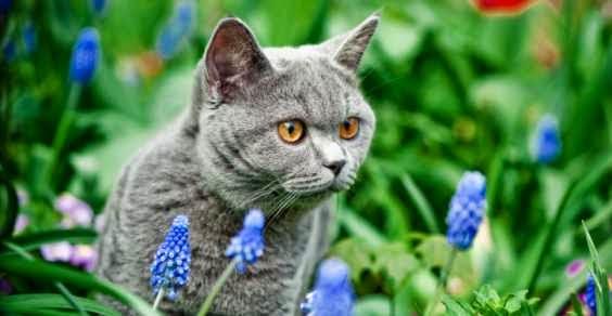 Le erbe dei gatti salute del gatto