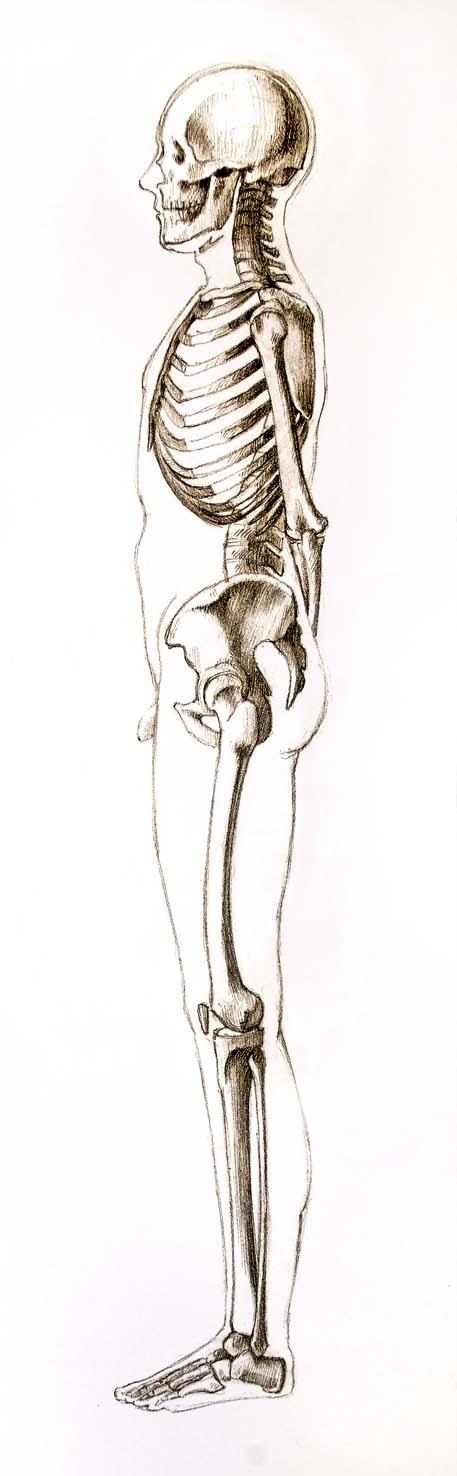 Moderno Esqueleto Humano Vista Anterior Patrón - Imágenes de ...