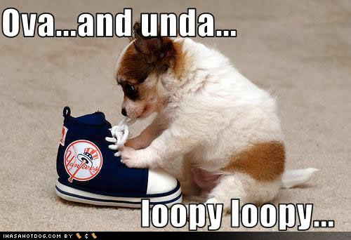 Cute Animals with Funny Captions Dogs