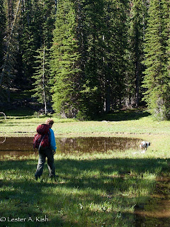 Hiker and dog along the trail to Golden Trout Lakes, Montana