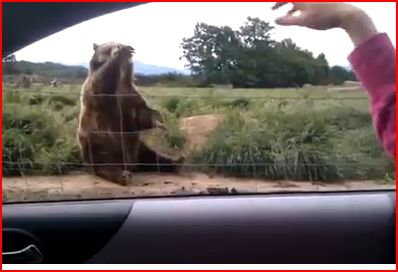 polite bear jjbjorkman.blogspot.com