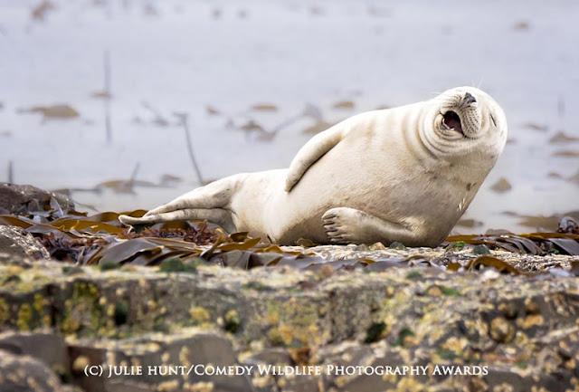 Competição as fotografias mais divertidas da vida selvagem