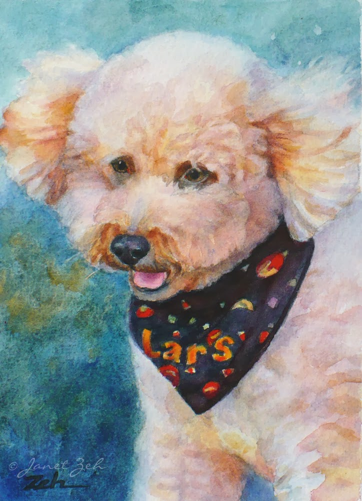 Pet Portrait of an Apricot Poodle