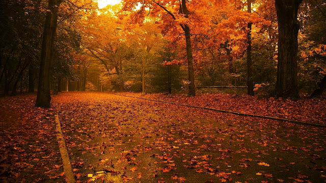 Awesome Sunshine On Autumn Day