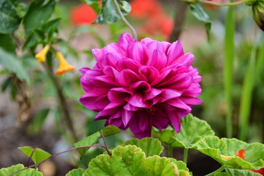 Tunupa Restaurant Ollantaytambo flower garden