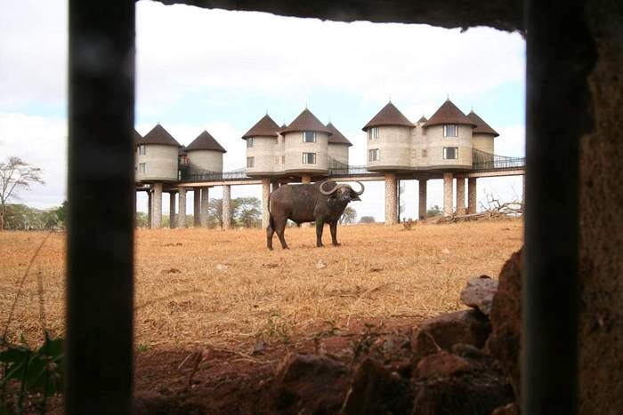 Tsavo Lodges Safari Hotels In Kenya Sarova Salt Lick Game Lodges