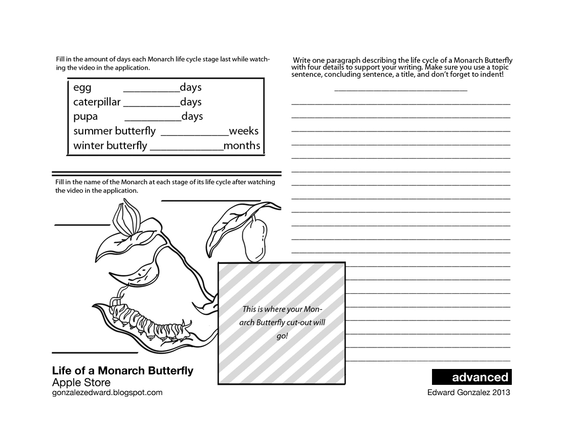 worksheet Butterfly Cycle Worksheet facilitating 1st 3rd grade writing eddies class the following video is in iphoneipad application and used to fill worksheet watch it pause as needed
