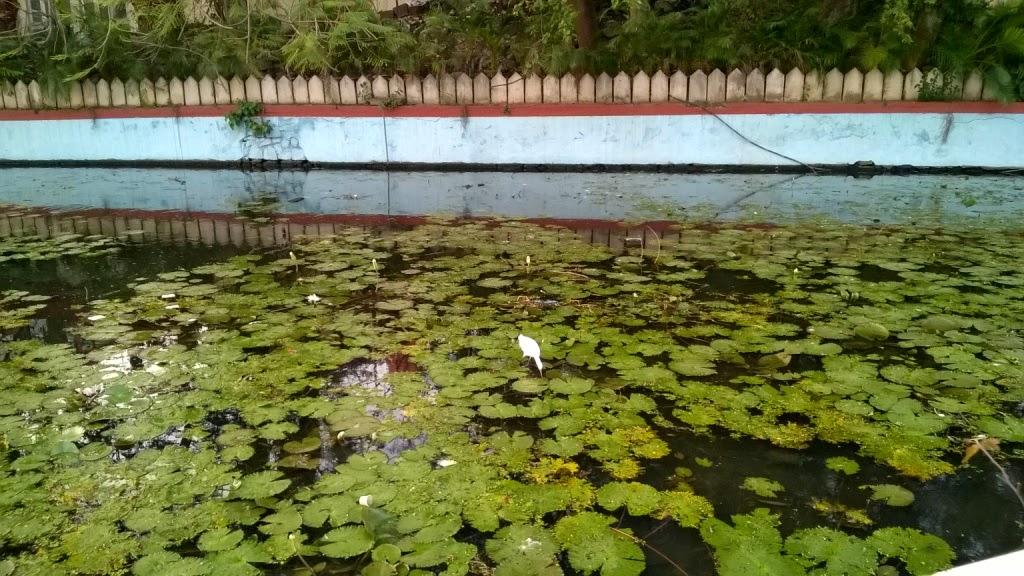 Pune gardens, Sarasbag