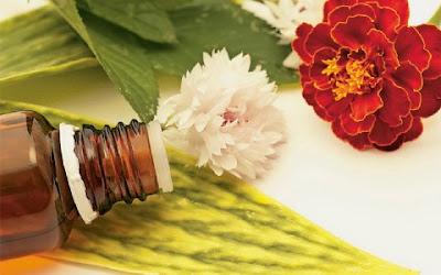 Μεταποίηση αρωματικών/φαρμακευτικών φυτών