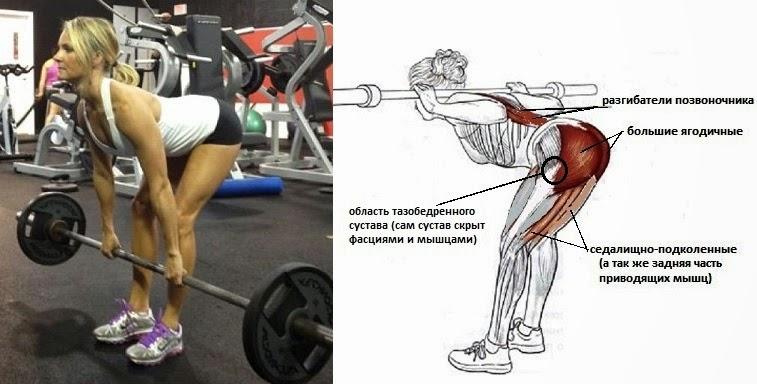 Тазобедренный сустав становая тренировка суставов в тяжелой атлетике