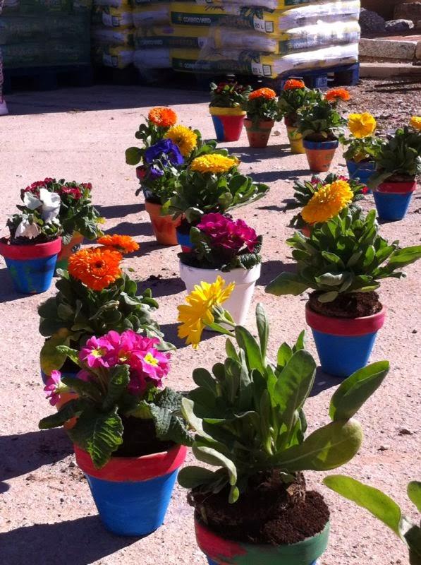 Flores, tiestos y tierra. Las Jaras, Valdepeñas