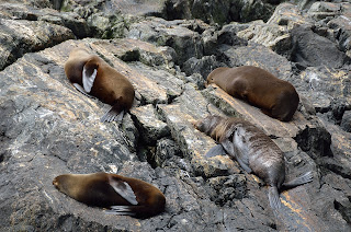 Group of seals resting on the rocks at Milford
