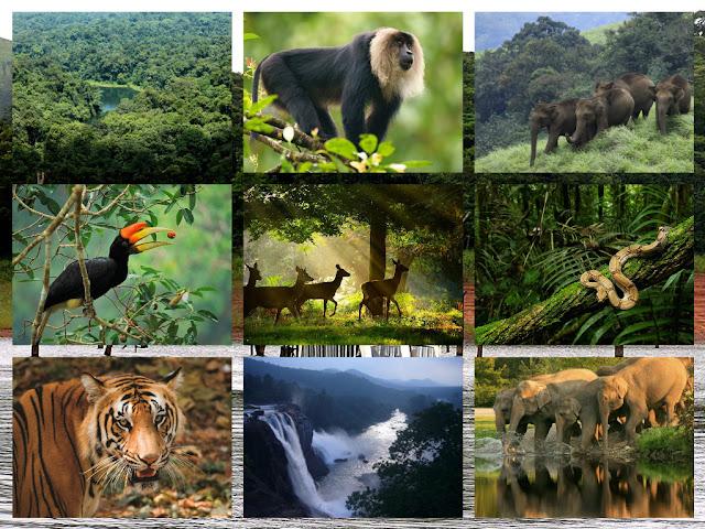 Voyage nationaux parcs en Inde du sud