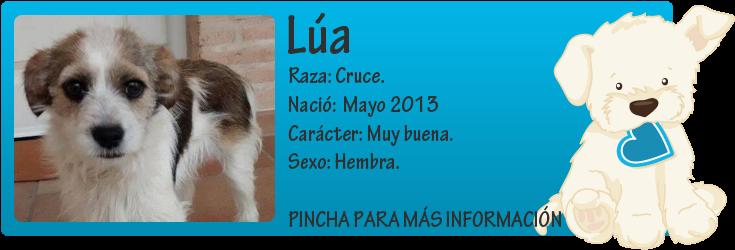 http://mirada-animal-toledo.blogspot.com.es/2014/05/lua-perrita-adorable-en-adopcion.html