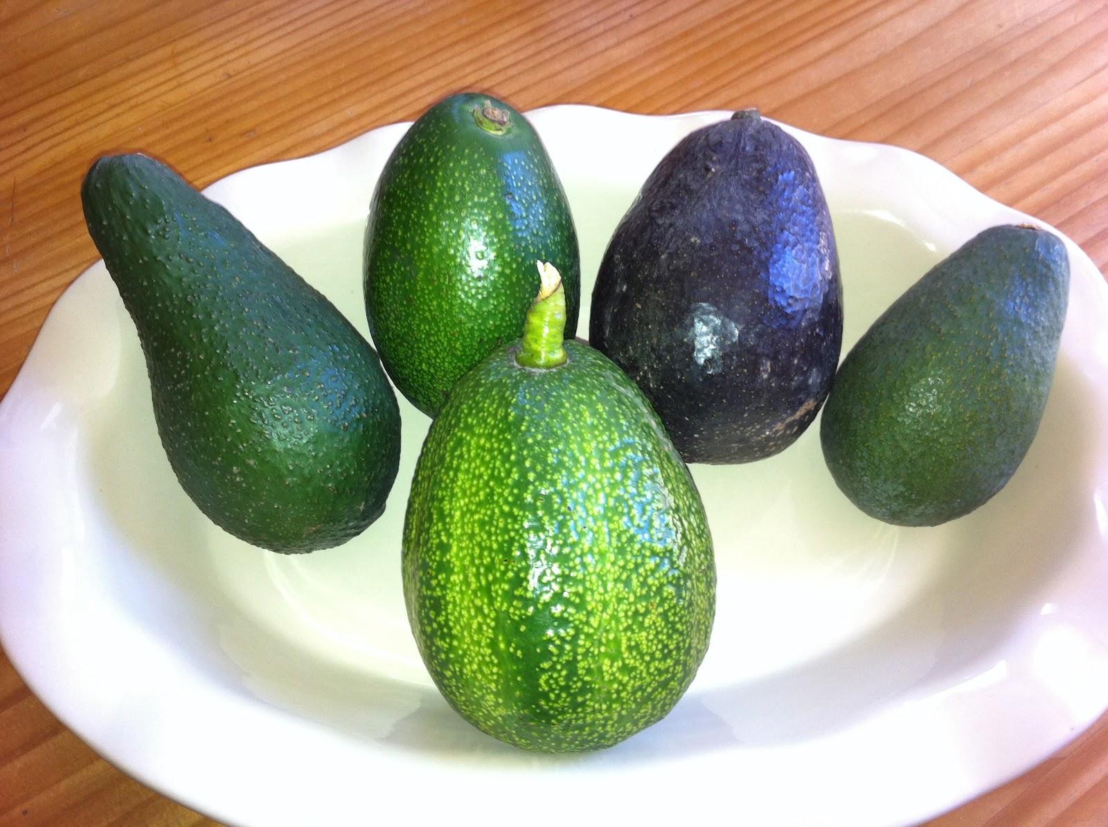 Avocado Diva: Why Won't My Avocado Ripen?!