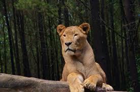 Paket Tour Bromo Taman Safari Prigen 2 Hari 1 Malam