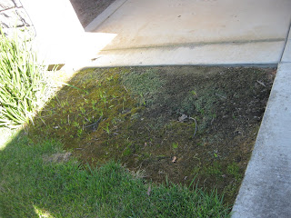 Total Garden Fail – and Then a Come Back