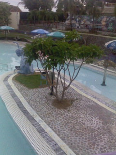 swimming pool maintenance guide