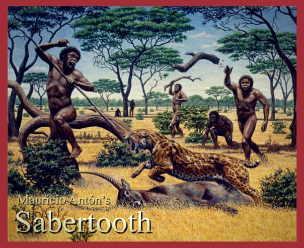 Homo erectus ช่วยกันไล่เสือเขี้ยวดาบเพื่อแย่งซากแอนติโลป