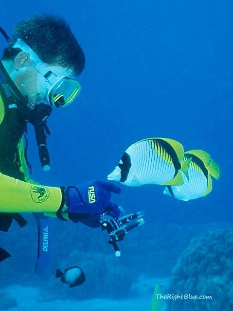 Diver with Lined Butterflyfish
