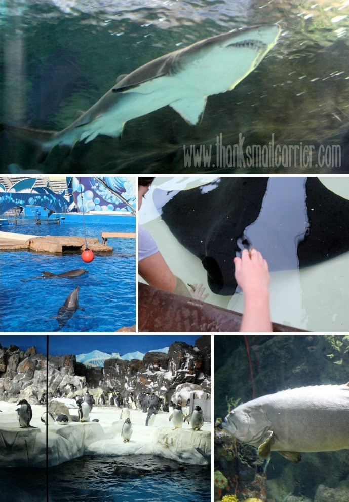 SeaWorld animals