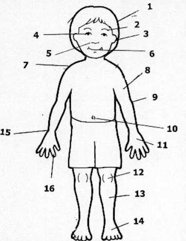 kokyu dosa las partes del cuerpo glosario. Black Bedroom Furniture Sets. Home Design Ideas