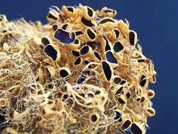 lichen in antarctica