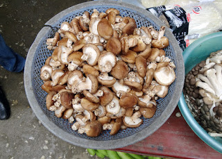 Sapa - the pardise of nutritional  mushroom