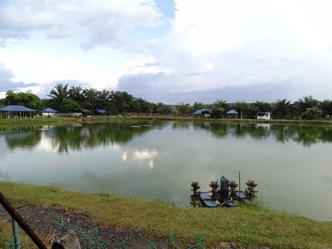 Fishing spots in kuala lumpur selangor gedangsa for Freshwater pond fish