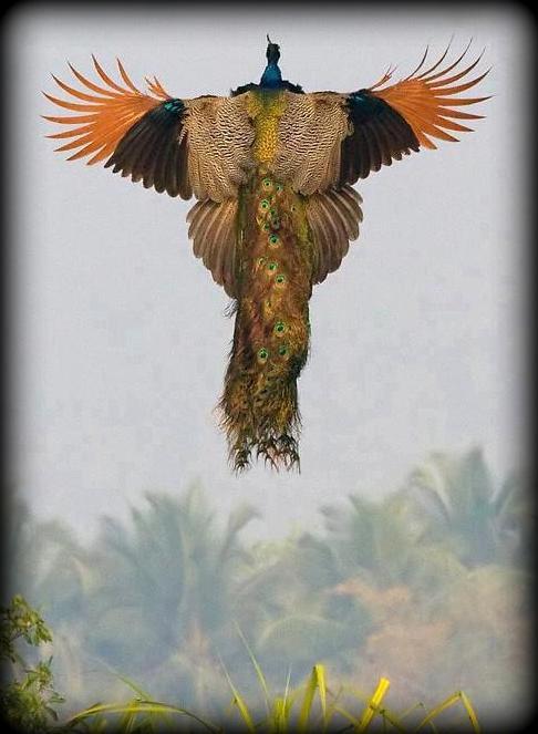 corbett national park india