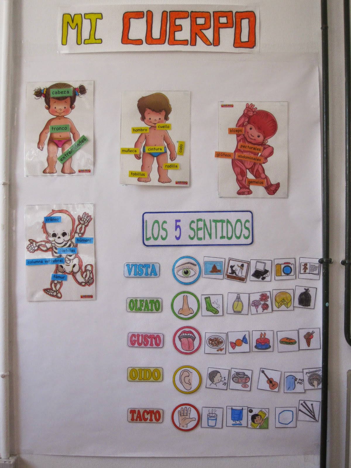 Pequefactoria mural el cuerpo y los sentidos for Mural de los 5 sentidos