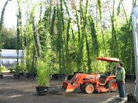 Bamboo Gardens1