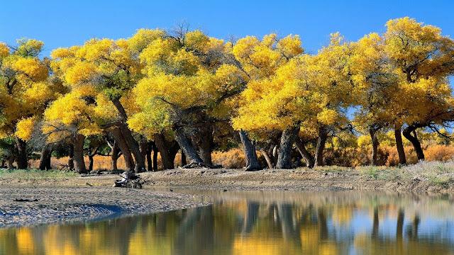 Beautiful Green  Tree Nature