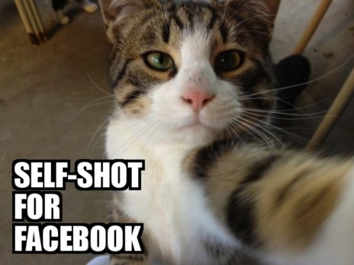 cat Self-Shot For Facebook