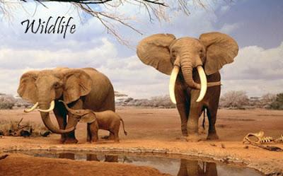 India Travel - wildlife sanctuaries