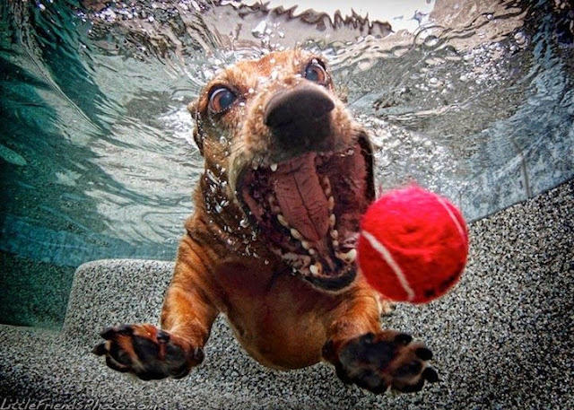 """My NTCC: Image:  A large-mouthed dog dives under water to retrieve a red tennis ball.  My NTCC:  A zealous X-member who is probably living in denial of his or her own ntcc eXperience sanctimoniously demands everyone else to """"Move On!"""" and """"Get Over It!""""   Healing is a process that varies with each individual. Take time to heal. Do what works for you."""