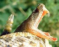 Acidentes com cobras