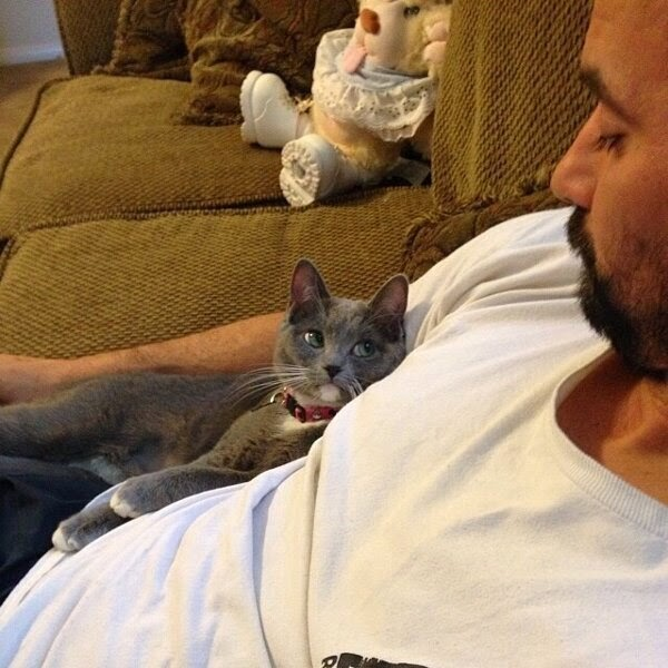 Funny cats - part 96 (40 pics + 10 gifs), cat pictures, cat cuddling with man