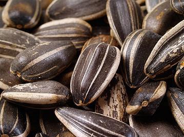 Semillas de girasol: sus bondades y beneficios Semillas-de-girasol