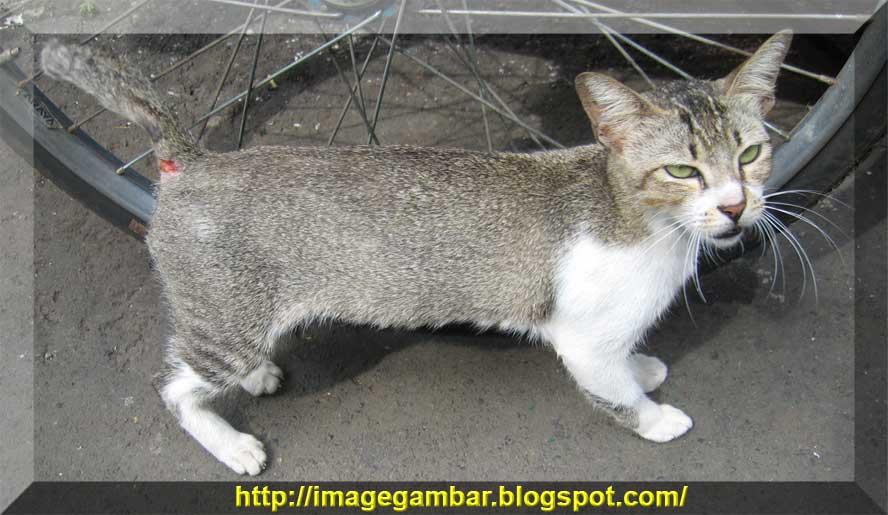 Image Gambar Untuk Semua Kucing Liar