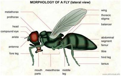 Lalat Pun Menjadi Bukti Kebenaran Rasulullah