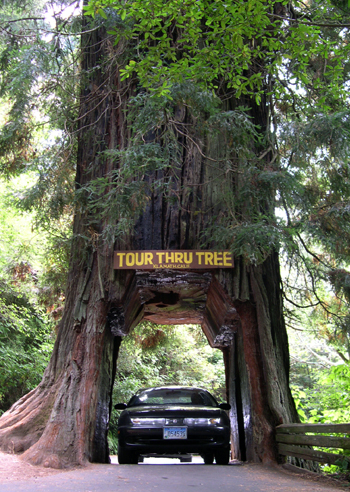Redefining The Face Of Beauty Redwoods Np California
